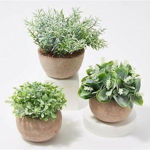 New Set of 3  Potted Succulents